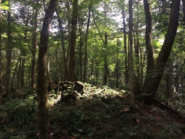 Is the Aokigahara forest in Japan really haunted? - Quora