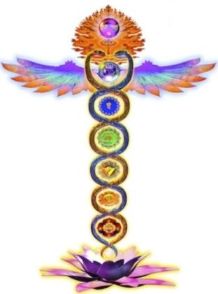 How are chakras related to the glands of the body? - Quora