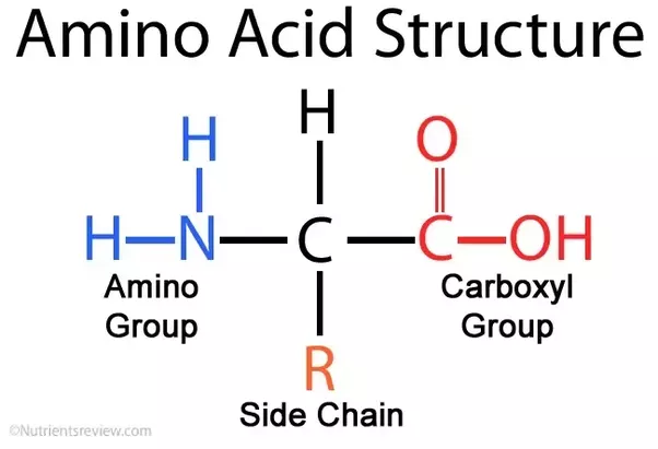 What Is Imino Acid And How Is It Different From Amino Acid Quora