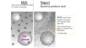 When you make yogurt at home why do you have to boil the ...