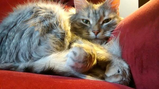 pics of grumpy cat