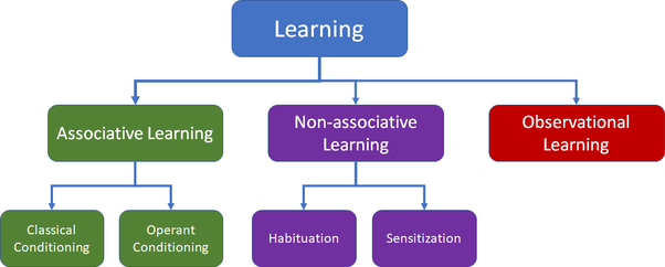 What Are The Main Differences Between Conditioning And Habituation
