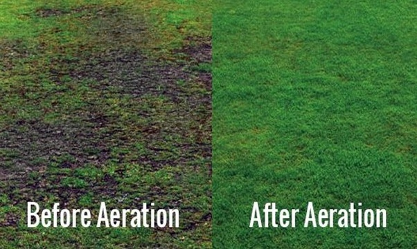 Some Tips In Aerating Your Lawn