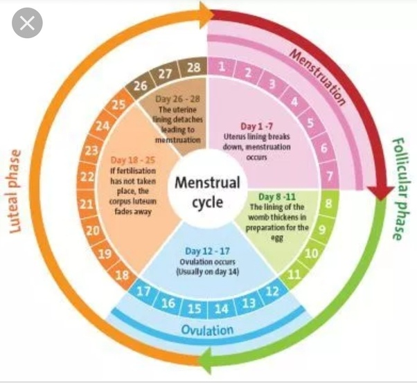 Can you get pregnant 2 days after your menstrual cycle
