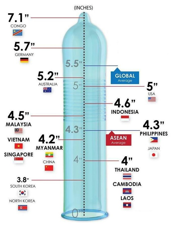 male of the penis size Avg