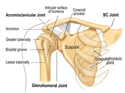 Collar bone diagram wiring diagram is collar bone popping bad for the collar bone quora rh quora com hip bone diagram ccuart Gallery