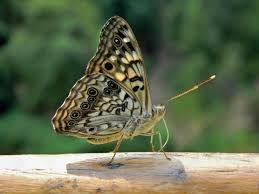 What does it mean when butterflies fly around you? - Quora