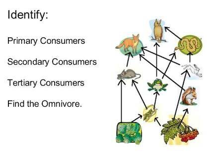 what are some examples of consumers that eat plants and animals quora
