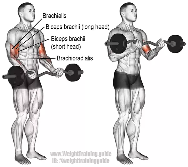 Push Ups Are Great But They Dont Hit Your Biceps As You Have Noticed Target Chest Shoulders And Triceps Which The Antagonist Of