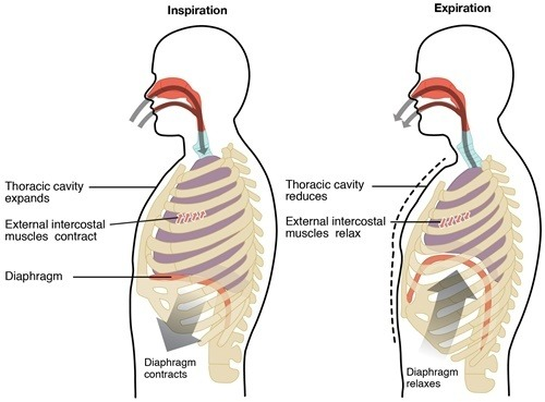 Can shortness of breath be associated with pregnancy quora ccuart Gallery