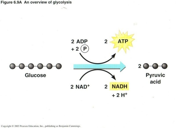 what are the formulae of glycolysis