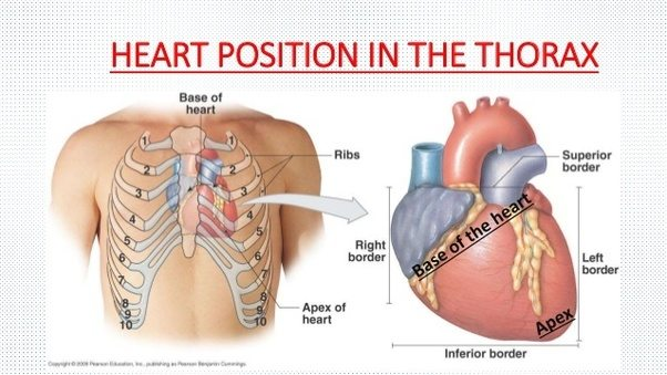 If the heart is located in the middle of the chest why is it felt see how on the above diagram youve got the heart behind ribs 234 heres a picture of me showing roughly where the heart is ccuart Choice Image