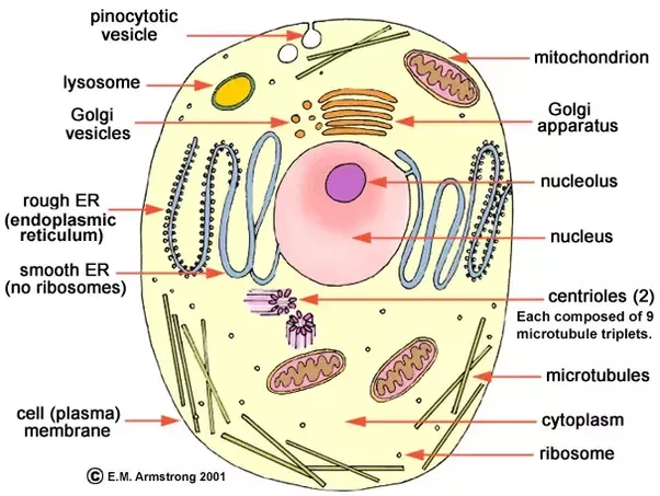 What Are Some Examples Of Prokaryotic And Eukaryotic Cells