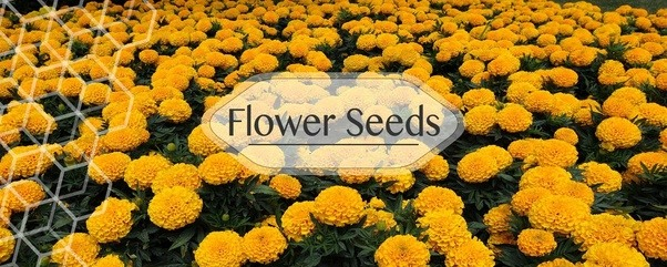 Buy Online Vegetable Seeds In India Flower Seeds Hybrid Herb Seeds India Is  Indiau0027s Largest Online Garden Store For Nature Lovers To Buy Organic Seeds  At ...