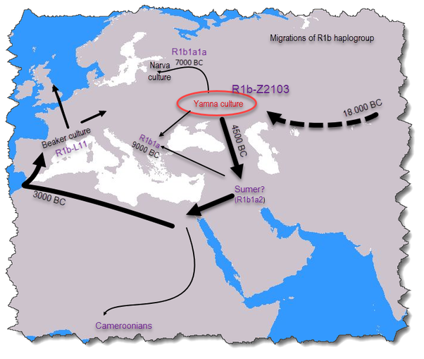 What is the difference between R1a and R1b haplogroups? - Quora