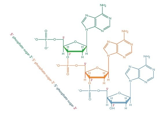 Basic Science Tells Us That In Dna The Purines Pairs With Pyrimidine
