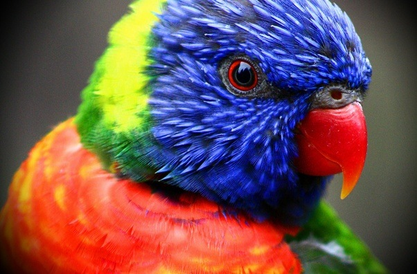 What are some of the most colorful birds? - Quora