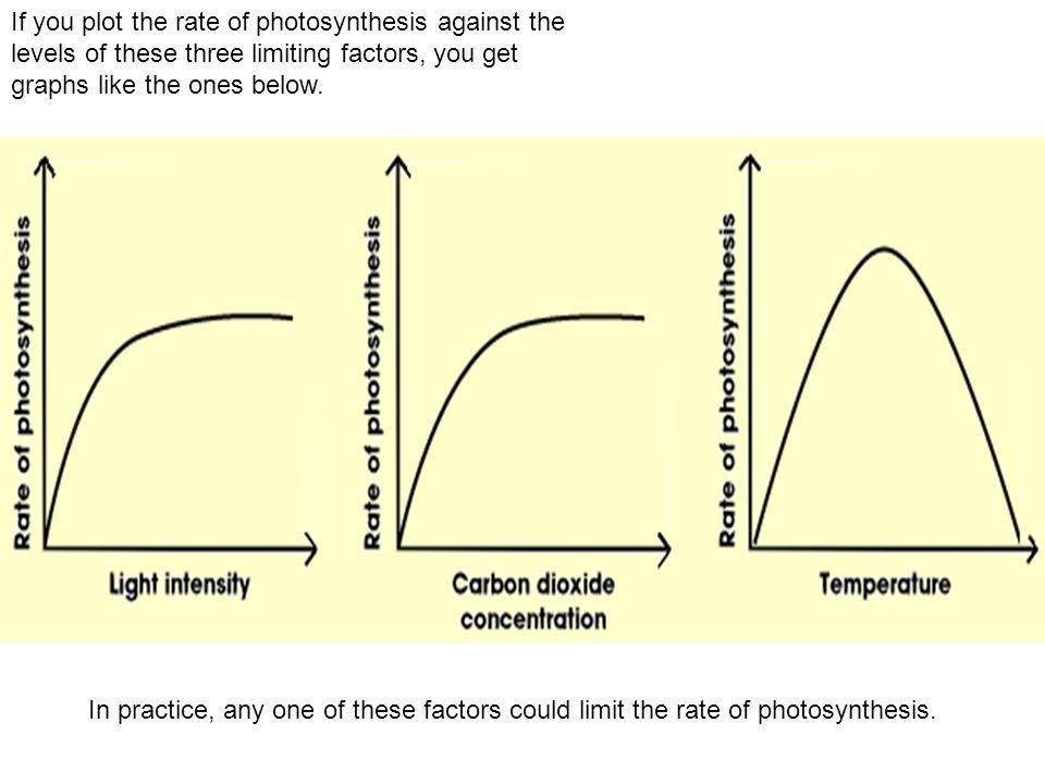 what can affect the rate of photosynthesis