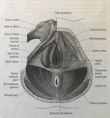 irritated skin at base of penis