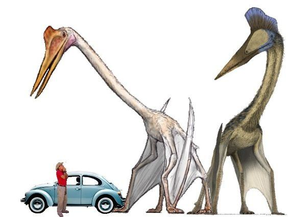 Could there have been flying animals with wingspans larger ...