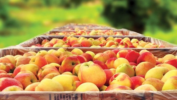 Which companies import Washington apples into India? - Quora
