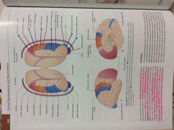 vishram singh neuroanatomy pdf download