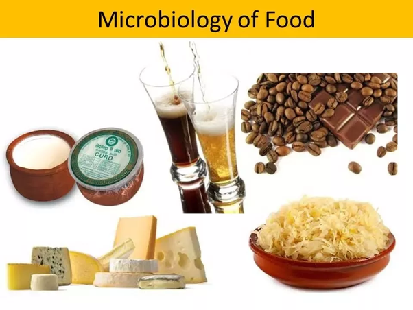What are 10 ways in which microorganisms are useful? - Quora