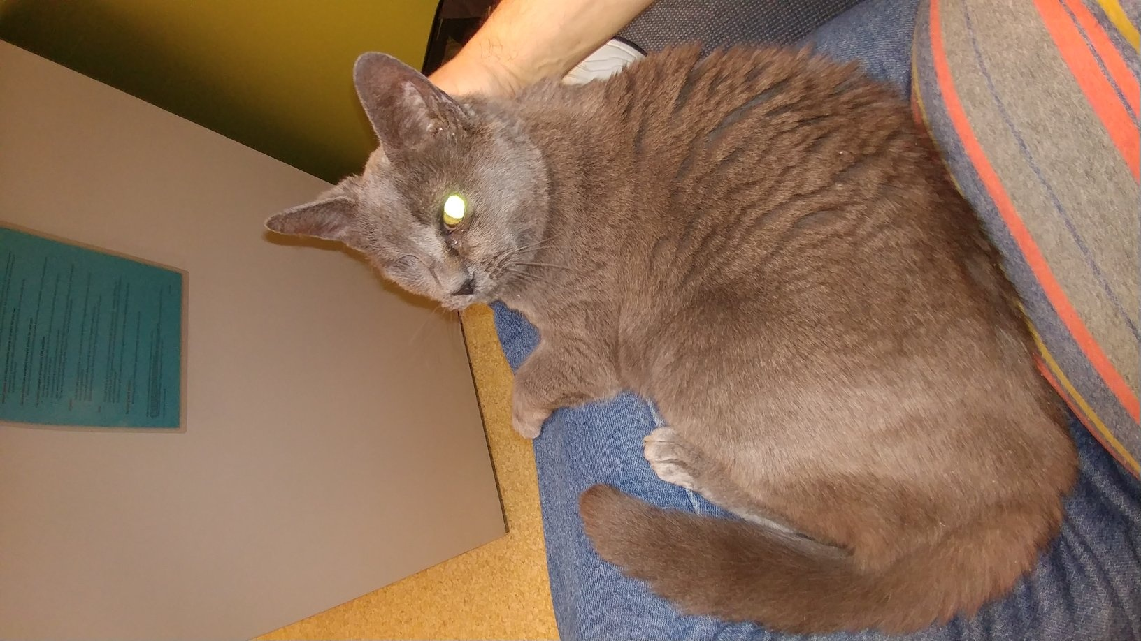 dcf0606f386b26 Would you adopt a dirty cat with special needs or would you get a ...
