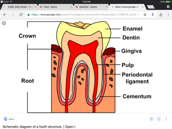 Why Dont Teeth Repair Themselves Like Most Other Living Cell Types
