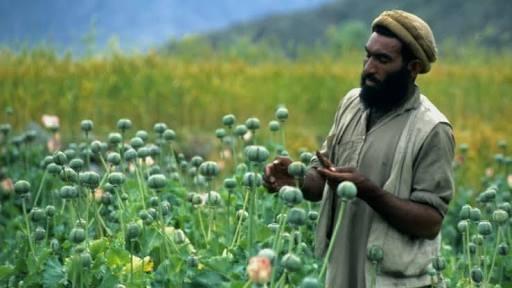What does ''Amli'' mean in Punjabi? - Quora