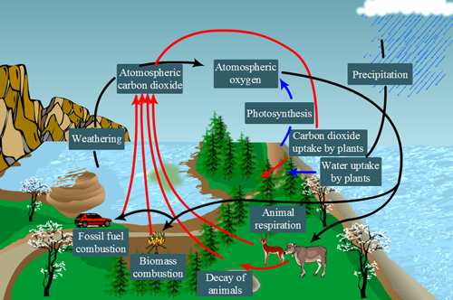 How to explain the oxygen carbon cycle quora 182 views ccuart Gallery