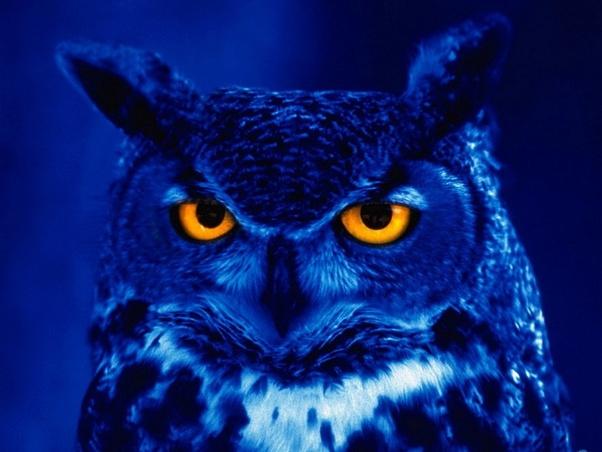 Do owls sleep? - Quora