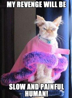 Image result for cat meme cat revenge for wearing clothes