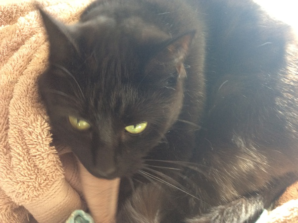 What Does It Mean When You See A Black Cat With Green Eyes Quora