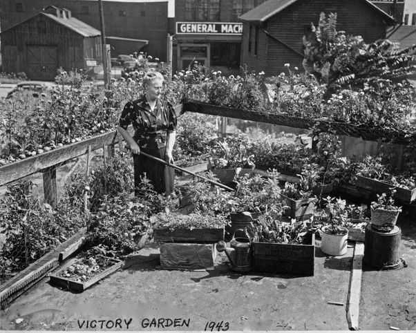 How to grow vegetables quora for What was the goal of victory gardens