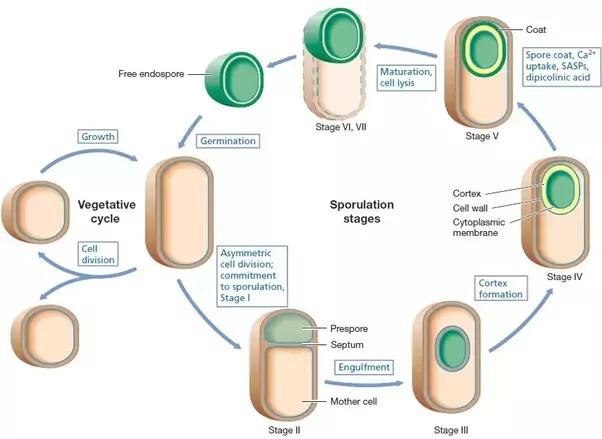 pdf Proteins Membrane