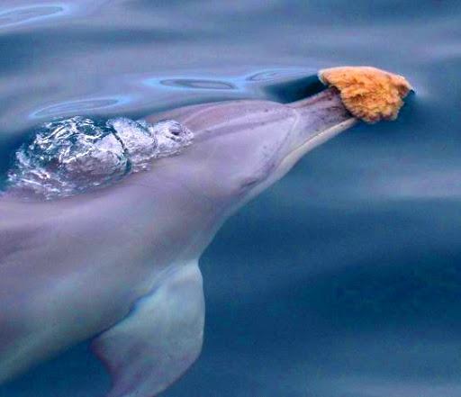 ¿Por qué los tiburones no comen delfines? Main-qimg-ee6ea00a3aa57fbece09c405d326c6df