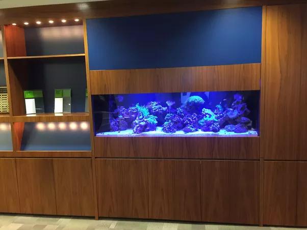 How To Make A Fish Tank Bookshelf Quora