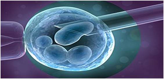 Is the egg retrieval procedure in IVF painful? - Quora