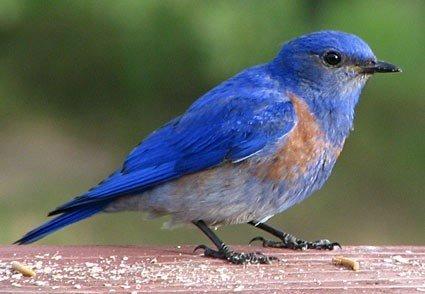 How To Understand The Bluebird Poem Quora