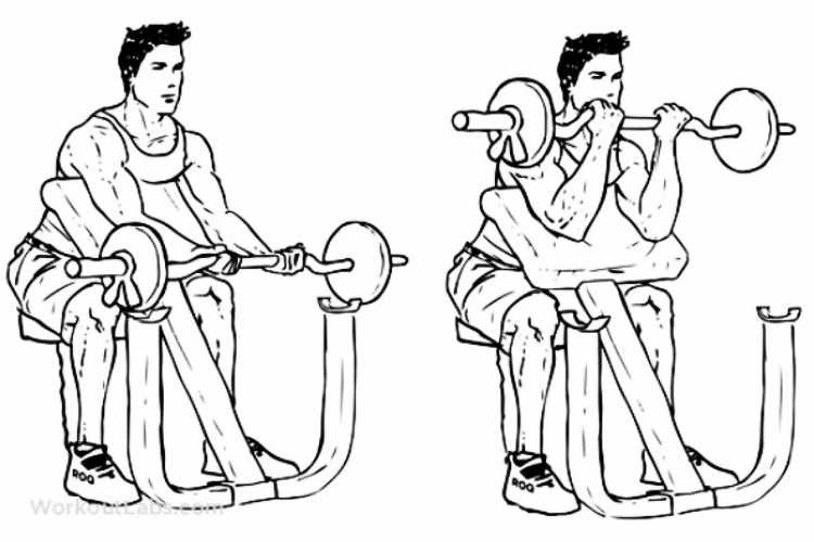 Preacher curls machine