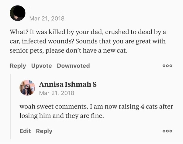 a4cee76a94c0 What should you never say to a cat owner  - Quora