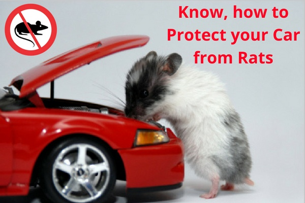 How can one get rid of rats ing a parked car? - Quora Rat Chewing Vehicle Wiring Harness on
