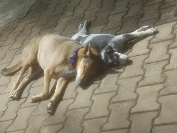New Puppy Older Dog Depressed