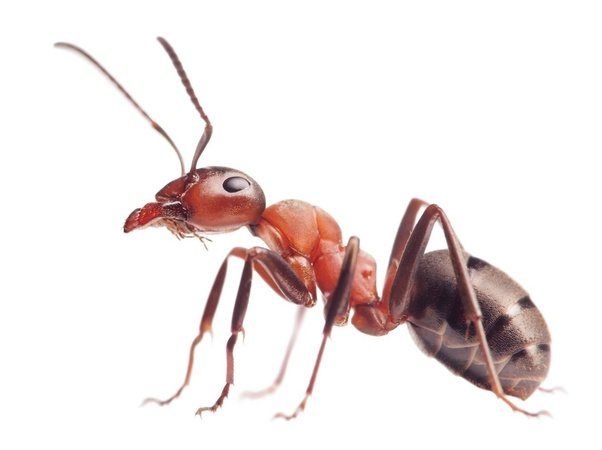 Image result for An ant