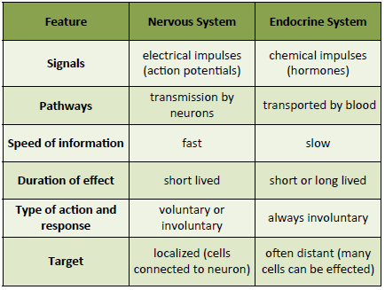 nervous and endocrine system work sheet Function is to work with nervous system in the internal control of the body  you  to turn your worksheet over and summarize the endocrine system in exactly five.