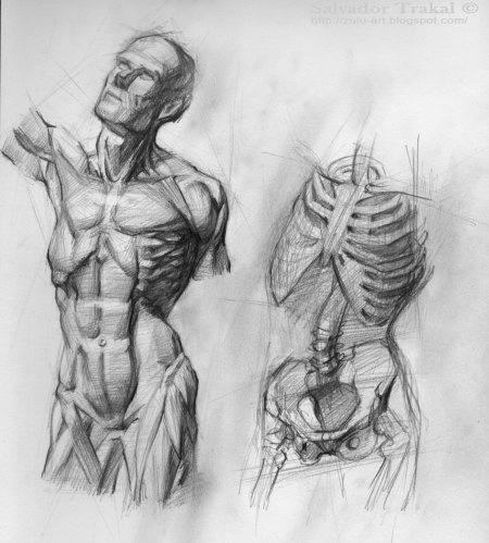 How To Study Properly To Be Good In Anatomy As I Find It Difficult