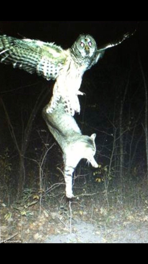 What do owls eat, and how do they do it? - Quora