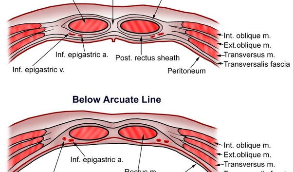 What is the new concept of rectus sheath? - Quora