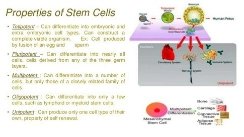 stem cell embryonic Adult stem vs cell